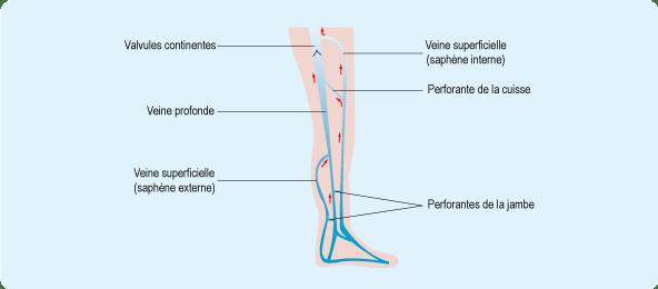 circulation-veineuse